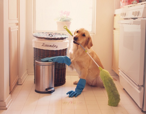 dog-cleaning-floor-house-chores-funny-sad-broom-gloves