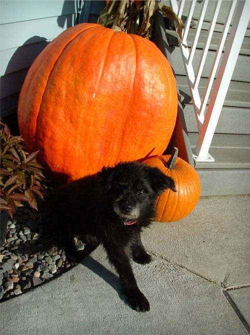 Junior pumpkins 2
